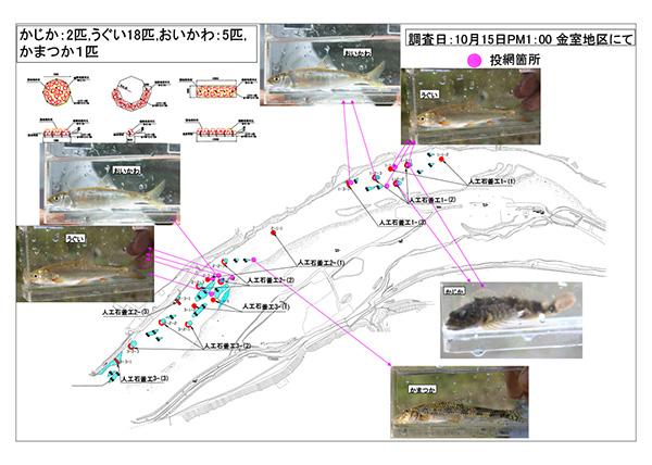 魚類調査_完成